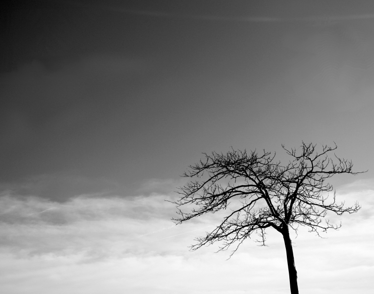 lonely__tree_by_world_breaker_92_d50hmmb